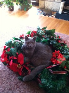 Baxter christmas